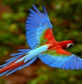 Top Most Beautiful Exotic Birds In The World