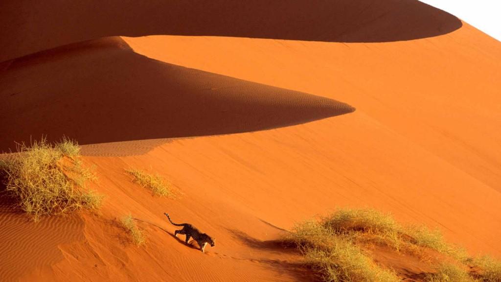 Crossing the Sand Dunes of Sossusvlei Park, Namibia, Africa