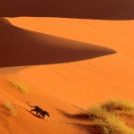Crossing the Sand Dunes of Sossusvlei Park, Namibia, Africa