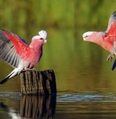 Top Ten Pet Birds List