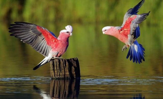 Top Ten Pet Birds