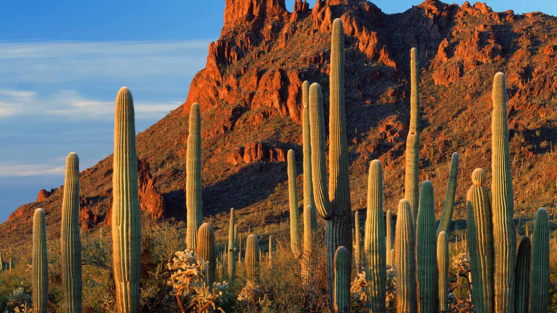 Alamo Canyon, Organ Pipe Cactus National Monument, Arizona