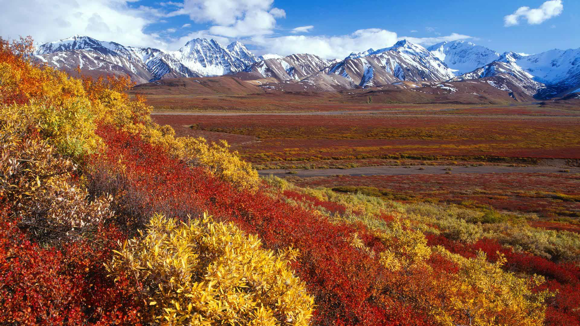 denali national park black singles Colorado backpacking trips in the  uncompahgre national forest – denali national park  wrangell st elias national park – black canyon of the gunnison.