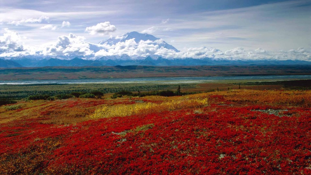 Brilliant Colors of Denali National Park, Alaska.