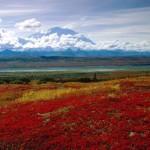 Brilliant Colors of Denali National Park, Alaska.