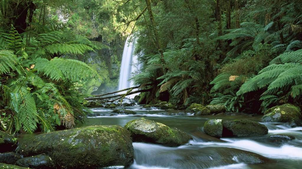 Hopetoun Falls, Aire River, Otway National Park, Victoria, Australia