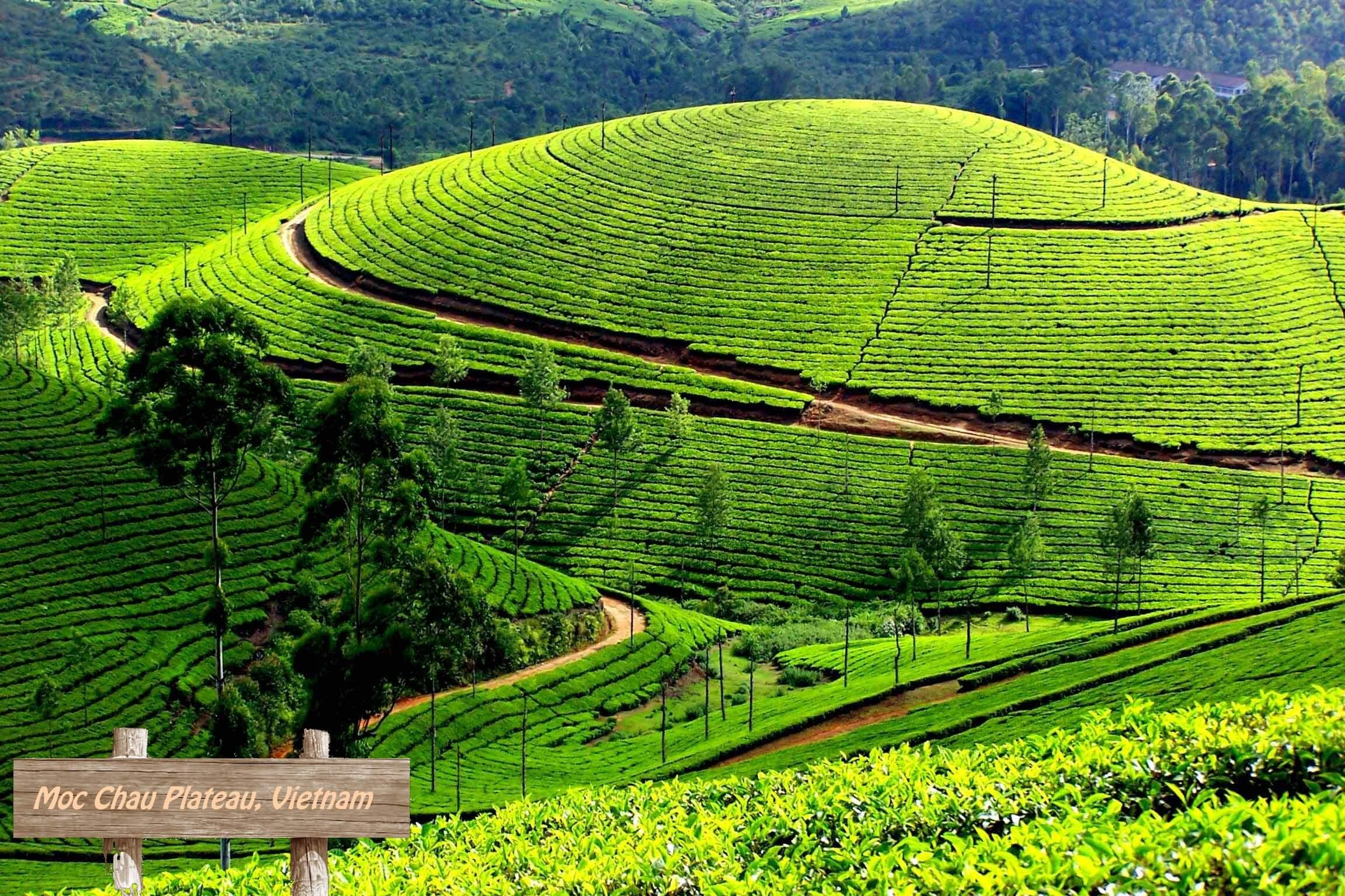 Moc Chau Plateau, Vietnam