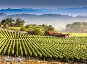 Savour the culture in Napa Valley