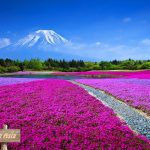 Top Flower Field in Asia