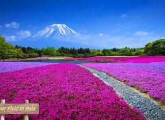 Top Flower Field in Asia