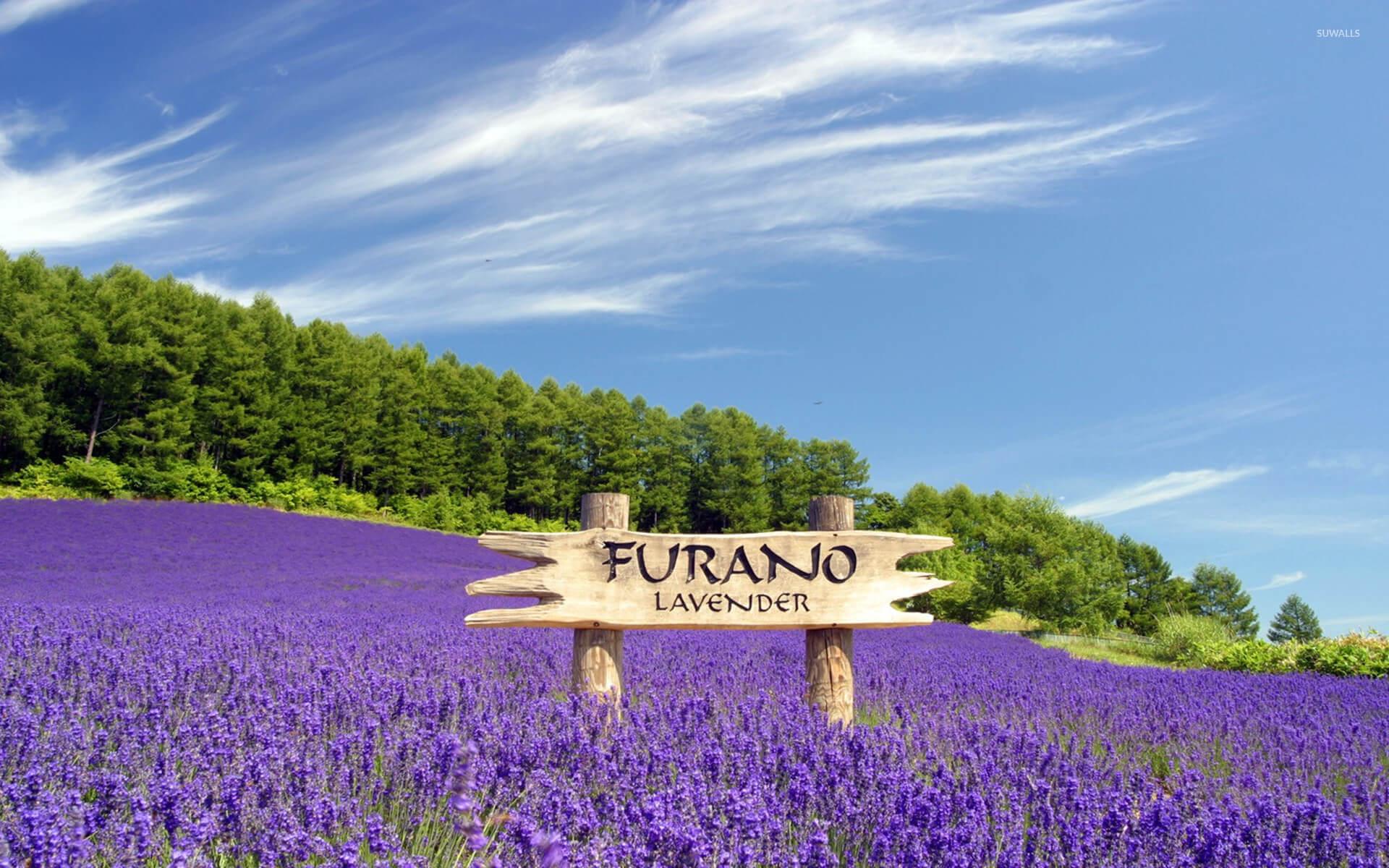 furano-japan