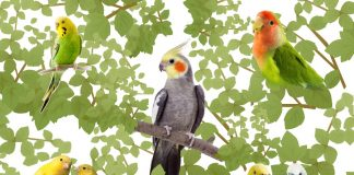 Best Pet Birds for Beginners