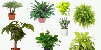 Best Indoor House Plants